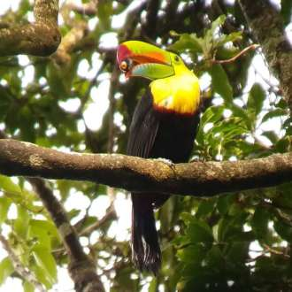 Nasua Birdwatching Tour